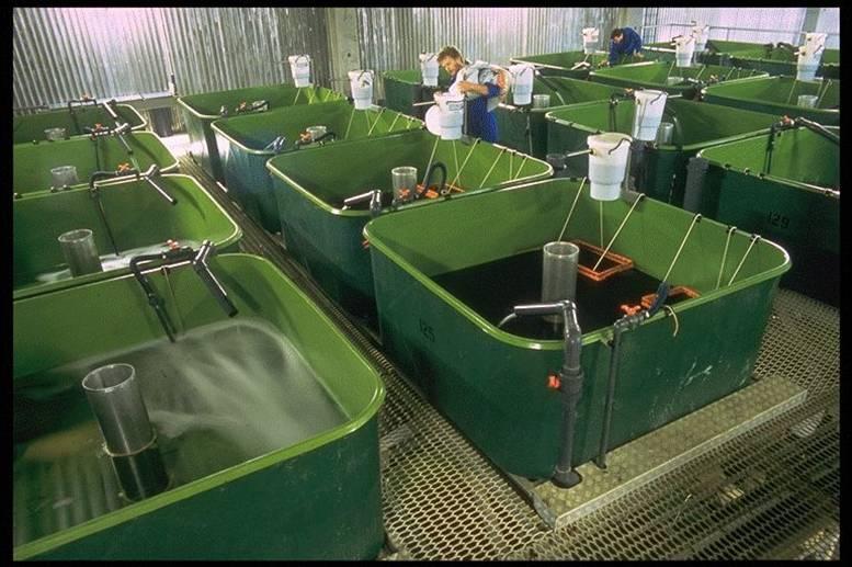 tilapia fish farming guide pdf